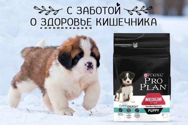 Корм Роял Канин для кошек купить в Минске | Зоомагазин